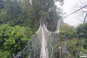 Maleisie Borneo Batang Ai Canopy Hangbrug
