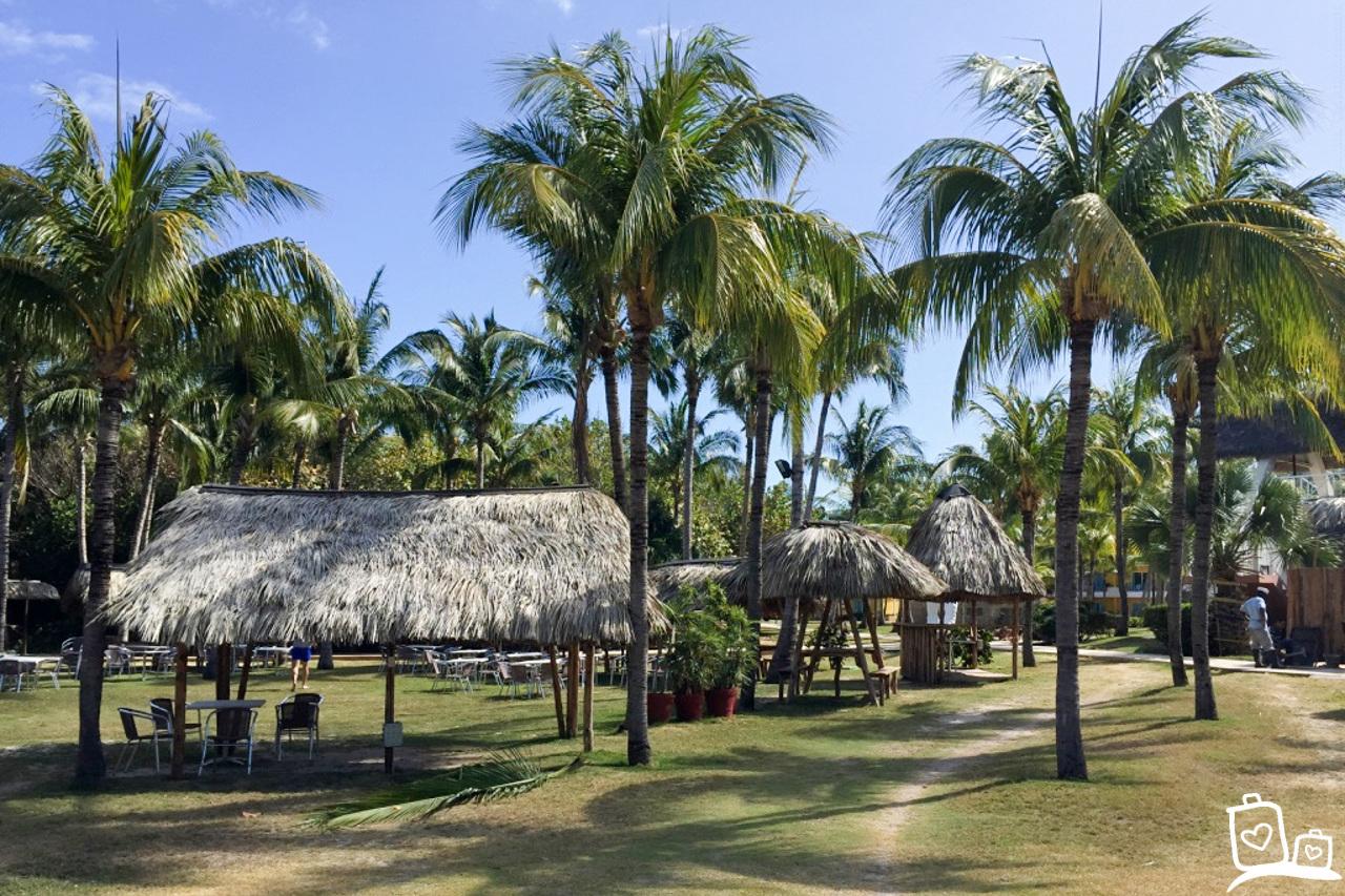 Cuba Varadero Palmbomen