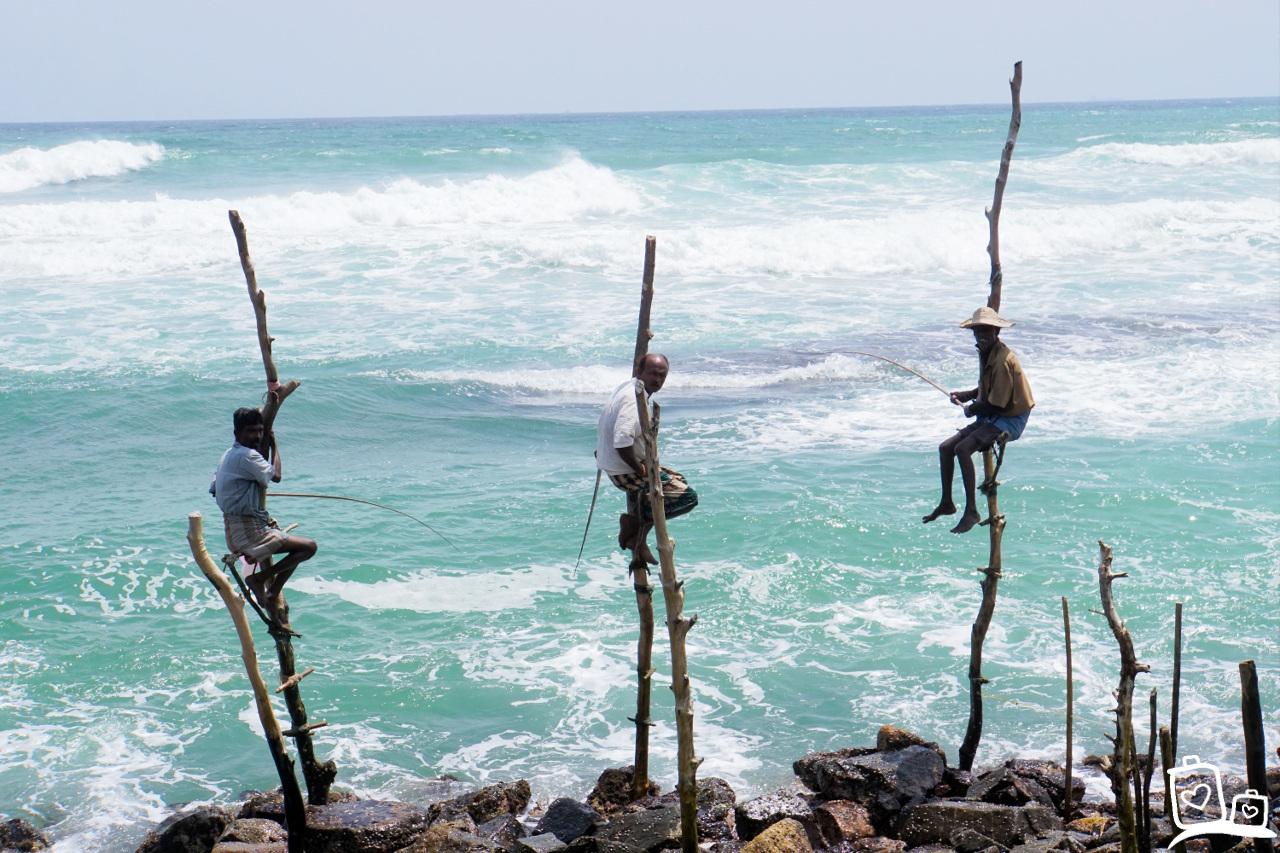 Sri Lanka Galle Paalvissers