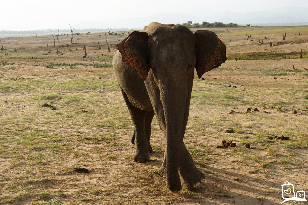 Sri Lanka Unawalawe NP Olifant Safari