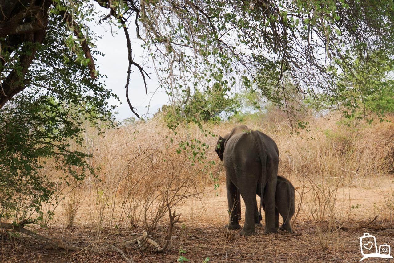 Sri Lanka-Unawalawe NP-Olifanten-Safari