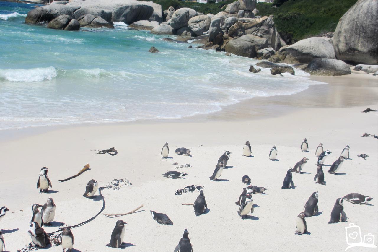 Zuid-Afrika Kaapstad Boulder Beach