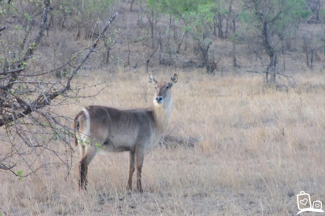Zuid-Afrika Kruger National Park