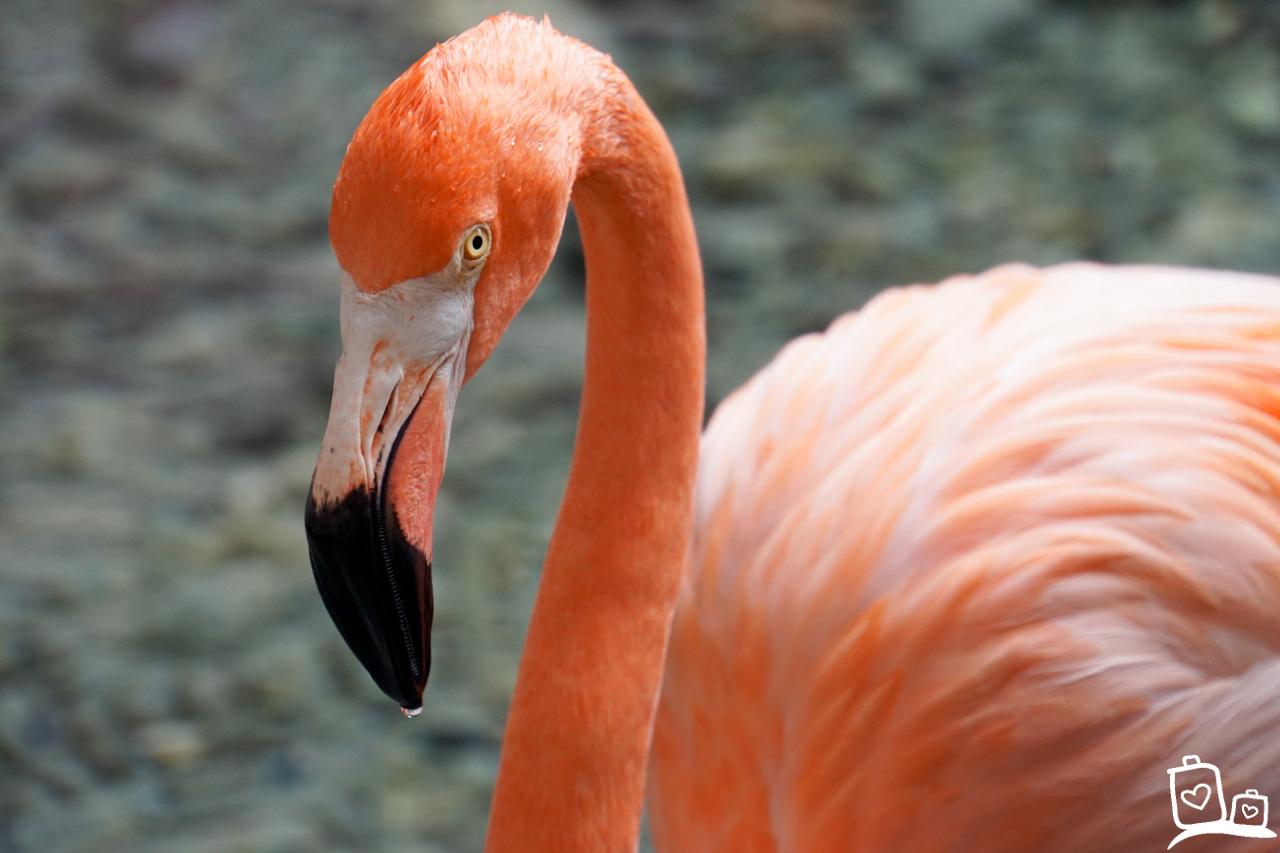 Curacao Flamingo Seaquarium