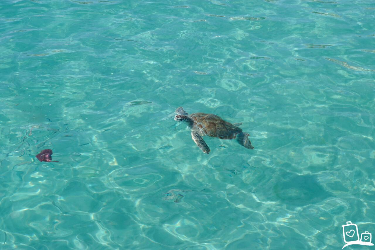 Curacao Playa Grandi