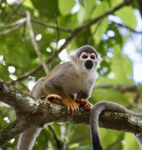 Ecuador - Amazone - Tena - Aap