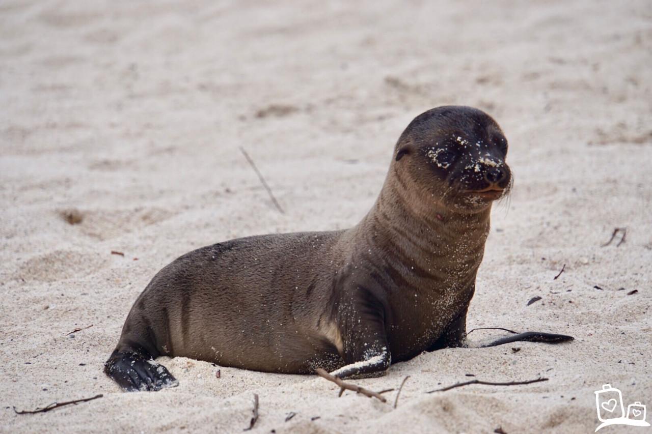 Ecuador Galapagos eilanden Zeeleeuwen