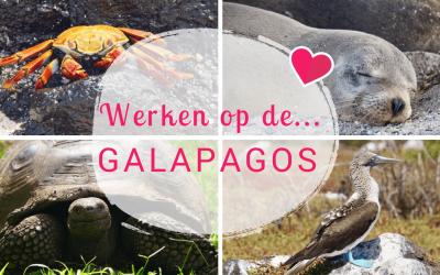 Werken op de Galapagos eilanden: genieten van een bucketlist bestemming!