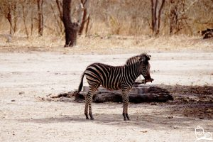 Gambia - Fathala Wildlife Reserve