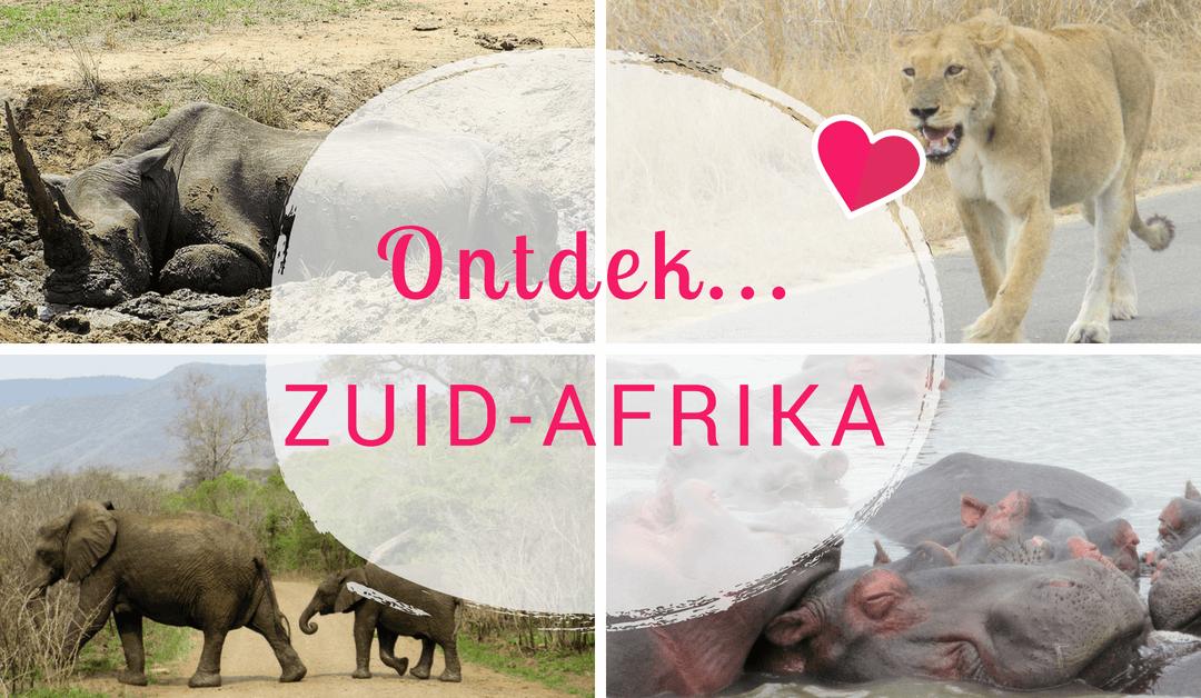 Ontdek Zuid-Afrika: Op zoek naar de Big Five!