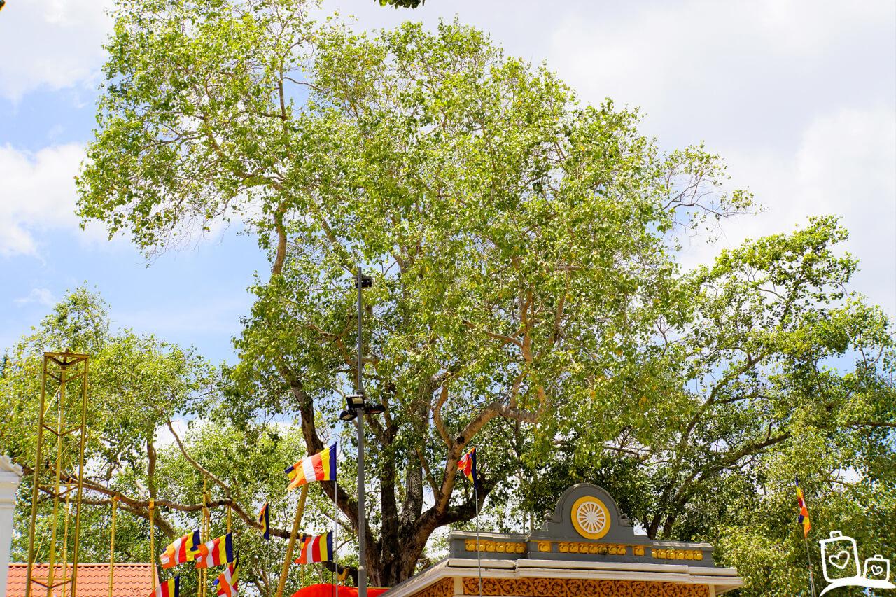 Sri Lanka-Anuradhapura-Bodhi-Tree-2