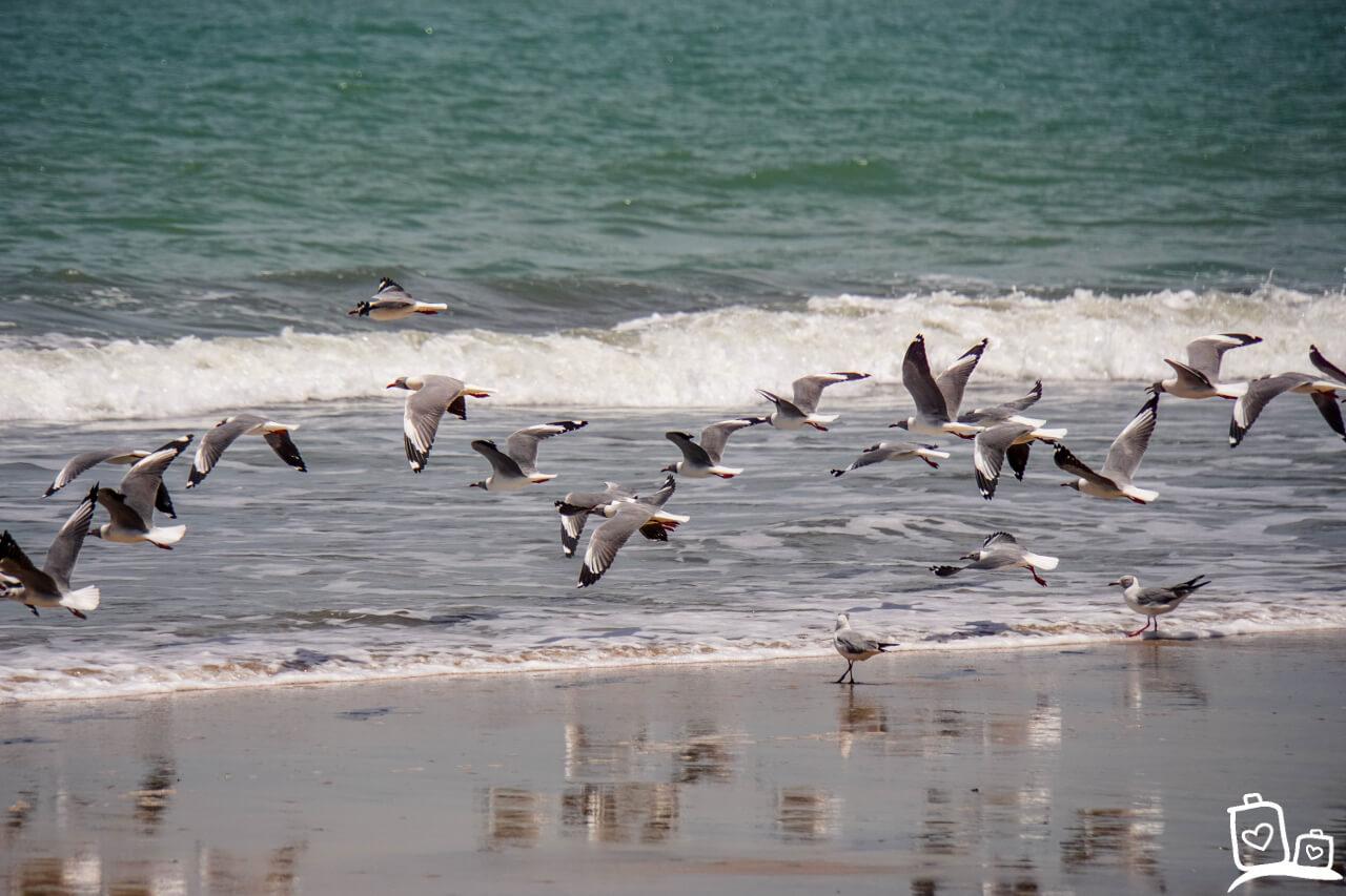 Gambia Strand Brufut