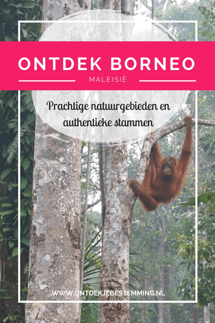 Borneo is een prachtige plek boordevol natuur, wilde dieren en authentieke stammen. Een absolute must-see tijdens je reis door Maleisië. In dit artikel vind je de hoogtepunten van een bezoek aan Sarawak. Lees snel verder!