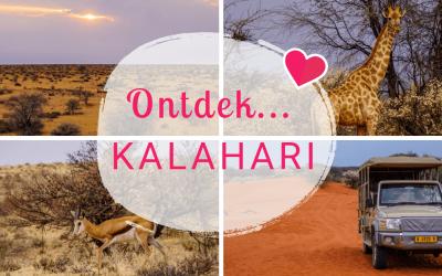 Namibië Blogserie Deel 2: Dieren spotten in de kleurrijke Kalahari woestijn!