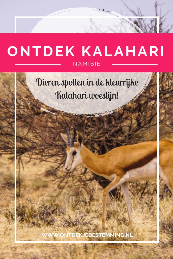De Kalahari woestijn staat bekend om haar prachtige duinen en het roodkleurige zand. Lees in dit reisverslag welke dieren wij hier hebben gespot!