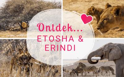 Namibië Blogserie Deel 6: Op safari in het Etosha National Park & Erindi Private Game Reserve!