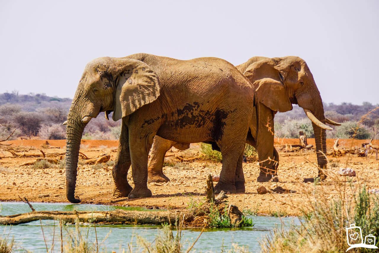 Namibie Erindi Olifanten Safari