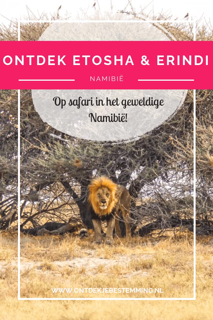 Namibië is een geweldig land om op safari te gaan. Dit kan super goed in het Etosha National Park en Erindi Private Game Reserve. Lees hier meer!