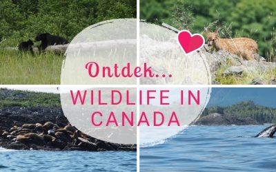 Ontdek… Canada: De leukste wildlife excursies in zuidwest Canada!