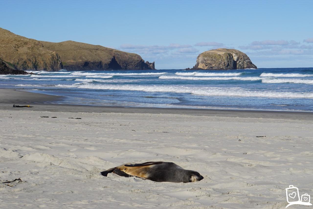 Nieuw Zeeland Dunedin