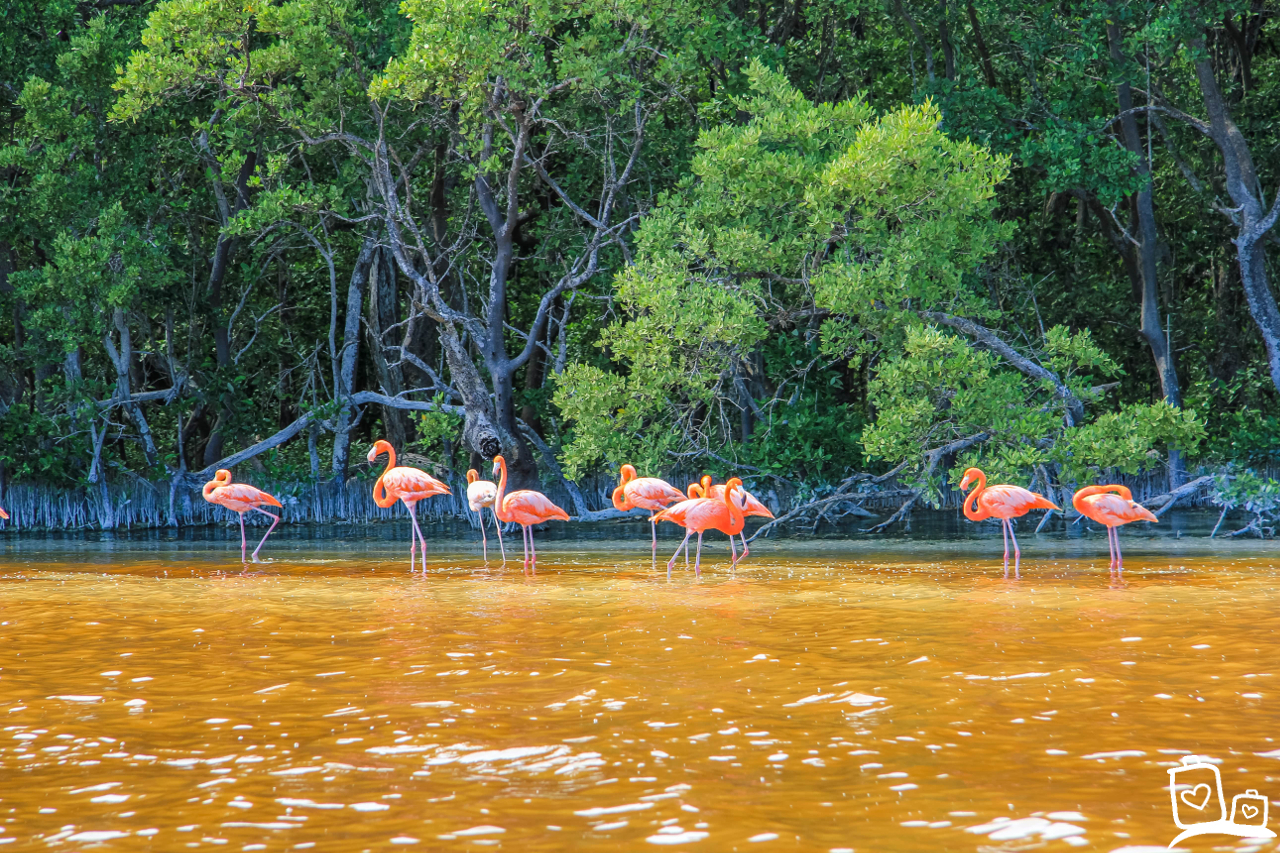 Mexico Celestun Flamingo