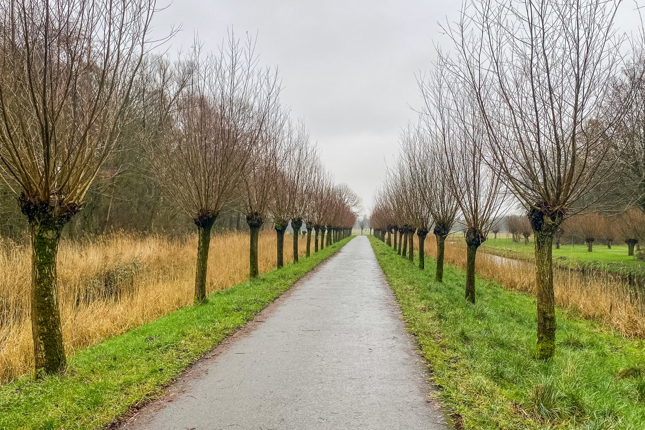 Biesbosch februari