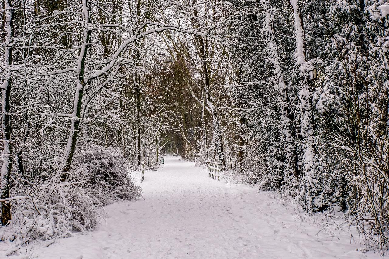 Sneeuw februari